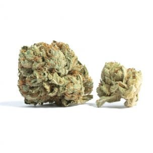 Weed Delivery In Vancouver with Canada's Top Cannabis Dispensary - budninjaexpress.com